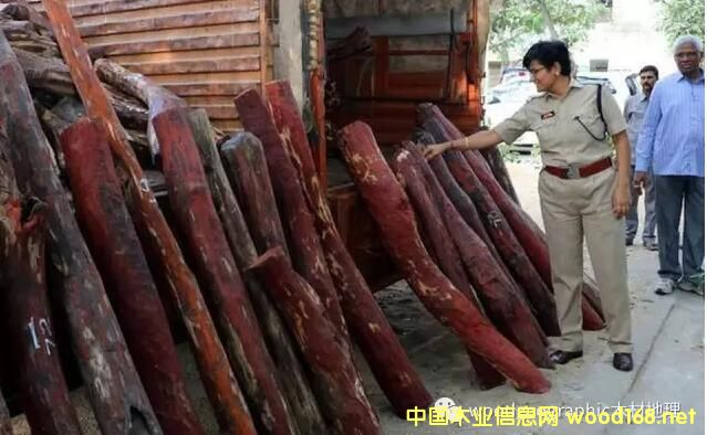 印度泰米尔纳德邦缴获大量走私紫檀木