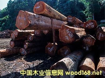 周评:市场信心不足,红木分类指数收跌0.71%