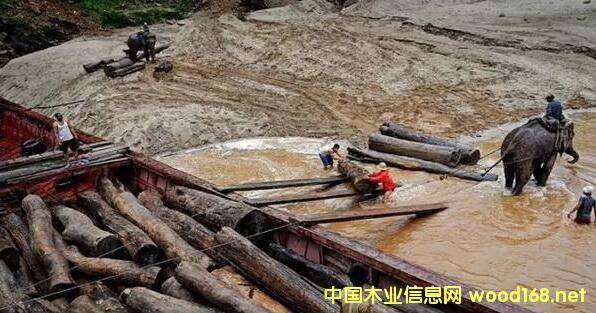 木材出口严控的当下,老挝材是否会成为救命稻草?