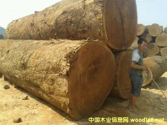 木结构材料-缅甸木莲木材强度等级评定
