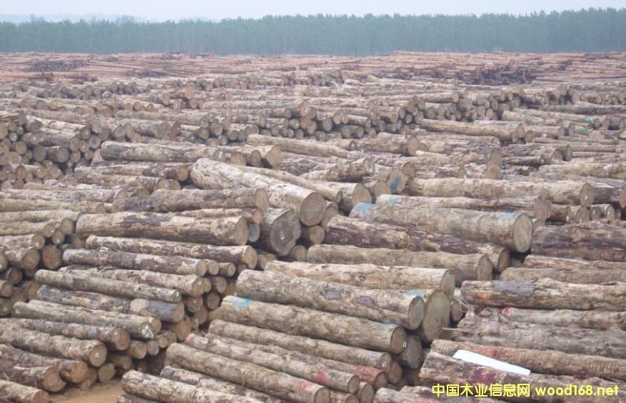 木材资源国际发布最新的全球木材和木材产品市场报告