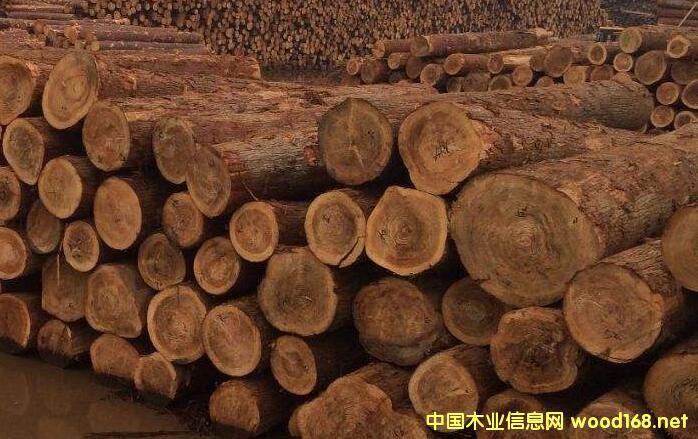 镇江新民洲港首次进口日本柳杉原木