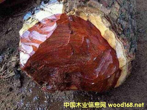 血檀大量砍伐的背后责任是否必须由中国木材贸易商独自承担?