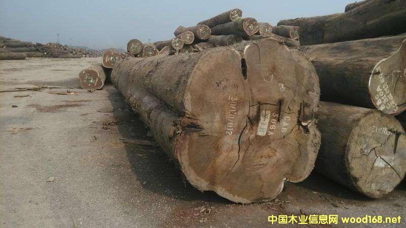 加蓬和喀麦隆木材出口不畅导致国家收入减少