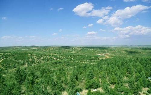 崇左市林业局2020年着力推进三项重点工作