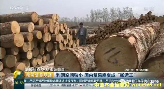 """央视木材市场调查:进口木材大幅增加 木材贸易商利润窄变成""""搬"""