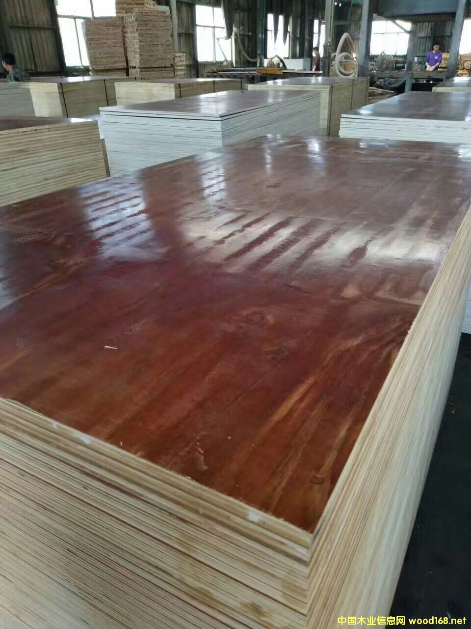 高档建筑模板厂家推荐:江苏沭阳县金森源木业