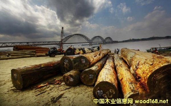 缅甸政府已经出台新的红木木材政策2
