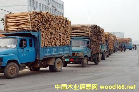 广西成为西南地区重要的木材进境口岸之一