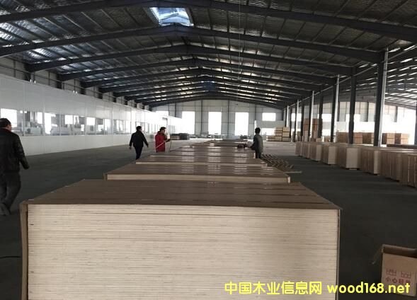 胶合板出口大型企业:江苏汇鸿亚森胶合板生产车间