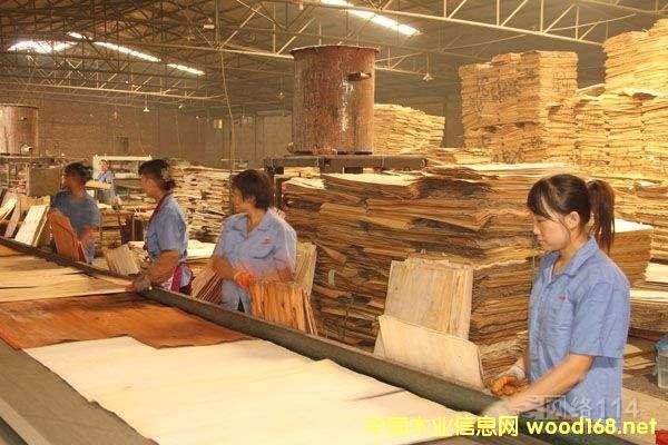 河北文安县取缔关停千家胶合板企业 只剩几十家大型企业