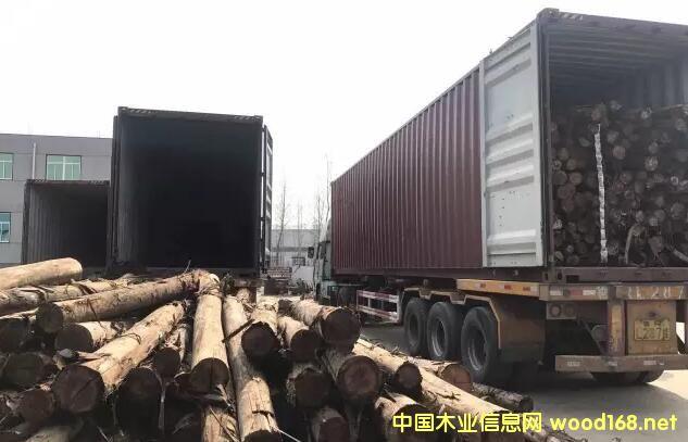 临沂普森商贸新到巴西桉木