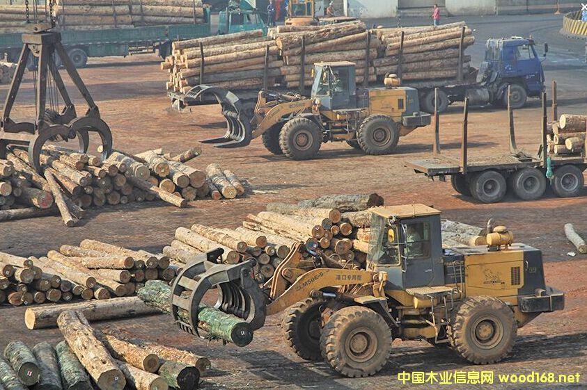 龙口口岸一季度进口原木货值增长118.5%