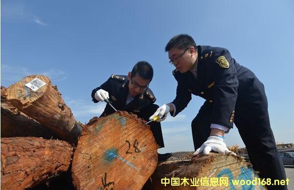 江苏镇江新民洲港进口木材41.3万方,实现销售3亿元
