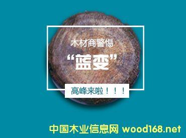 警惕!木材原材料将进入蓝变高峰期