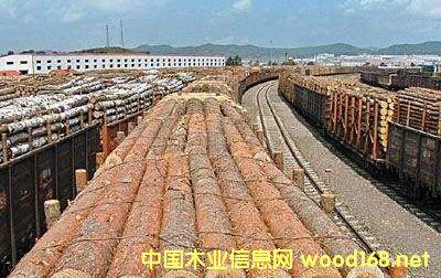 白桦、樟子松、红松、白松 内蒙古一天进口五万多立方俄罗斯木材