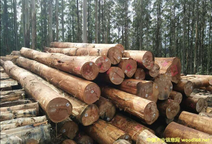太仓港板材进口量趋稳 进口澳大利亚原木涨幅达二倍居首位