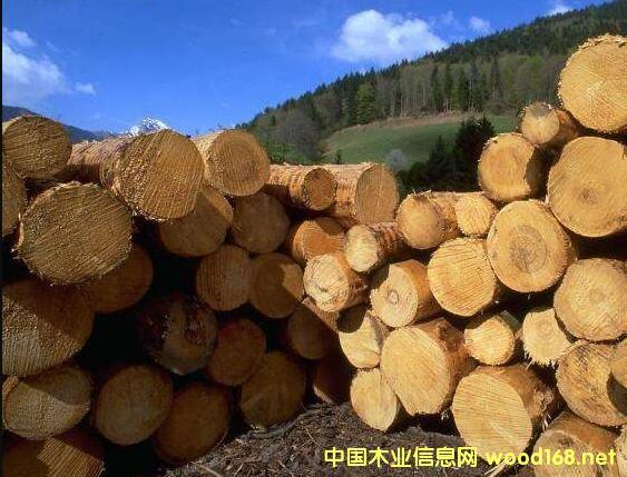 新西兰木材出口量未来5年将不断提升