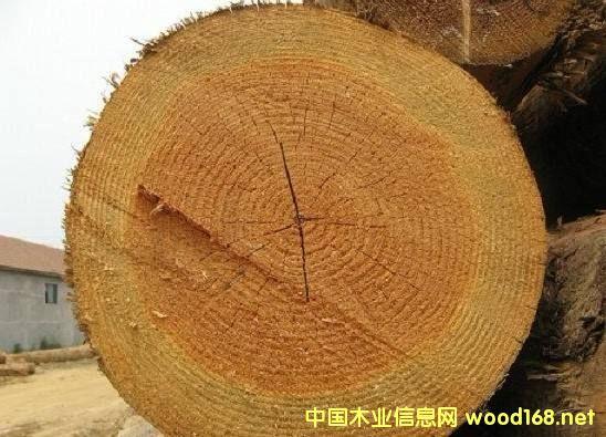 木材百科:花旗松,成材最快的北美软木树种
