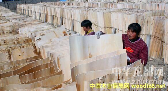 项城市新桥镇优质板皮畅销江苏、山东、安徽等省