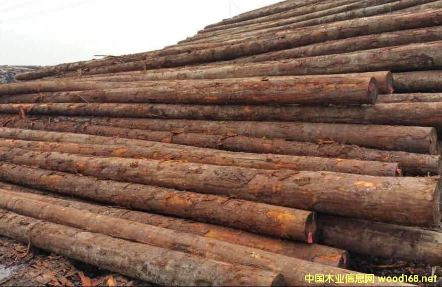 北美铁杉原木