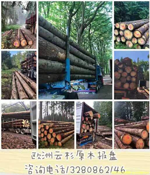 欧洲云杉原木