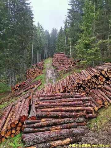 [供] 欧洲云杉原木期货